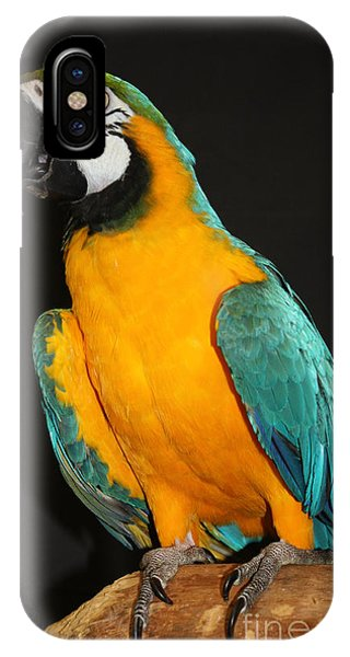 Macaw iPhone Case - Macaw Hanging Out by John Telfer