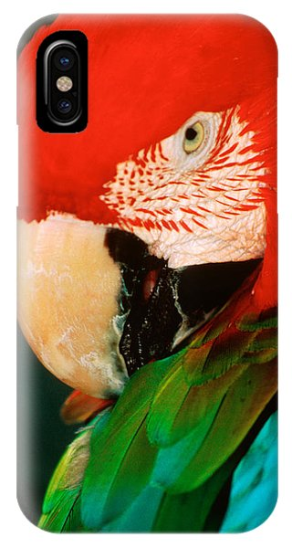 Macaw iPhone Case - Macaw Portrait by Anonymous