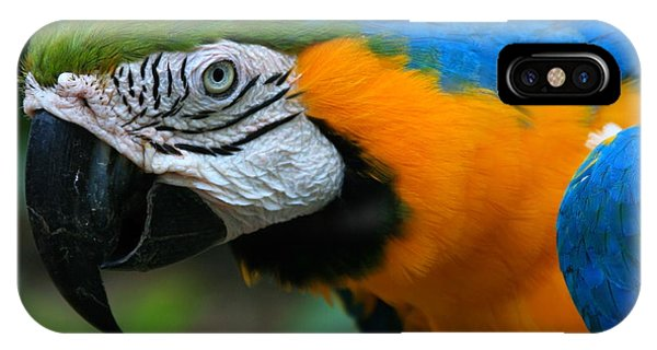 Macaw iPhone Case - Macaw With Sweet Expression by Karon Melillo DeVega