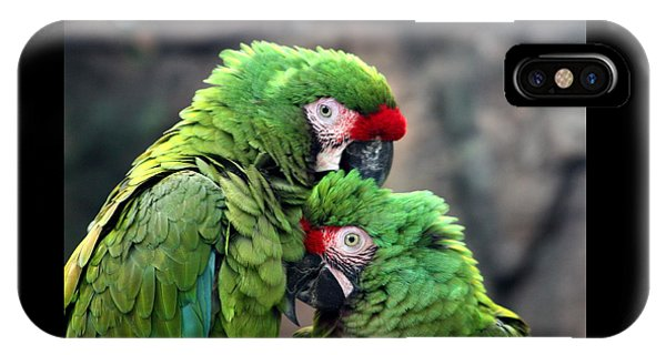 Macaws In Love IPhone Case