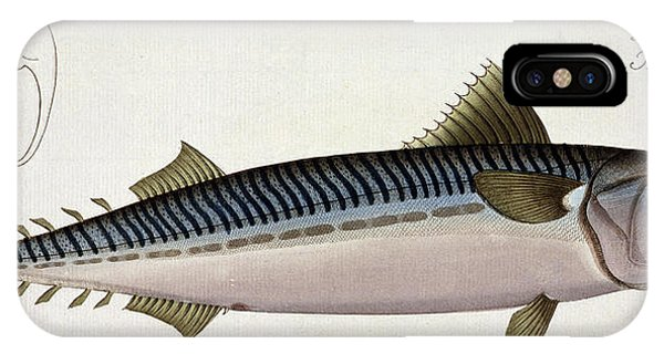Ichthyology iPhone Case - Mackerel by Andreas Ludwig Kruger