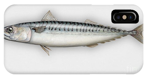 Mackerel Scomber Scombrus  - Maquereau - Caballa - Sarda - Scombro - Makrilli - Seafood Art IPhone Case