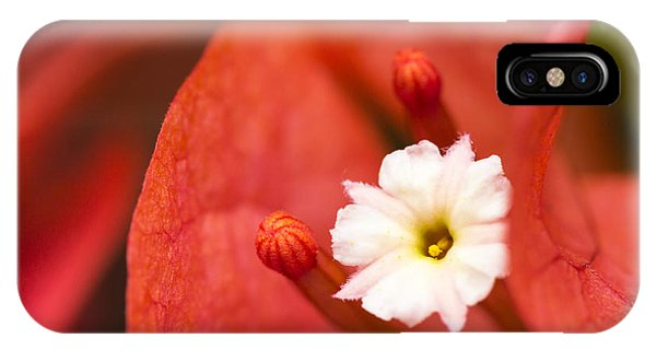 Macro Bougainvillea Bloom 1 IPhone Case
