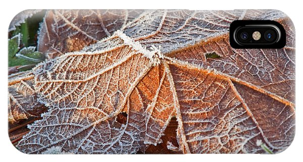 Macro Nature Image Of Fallen Leaf With Frost IPhone Case