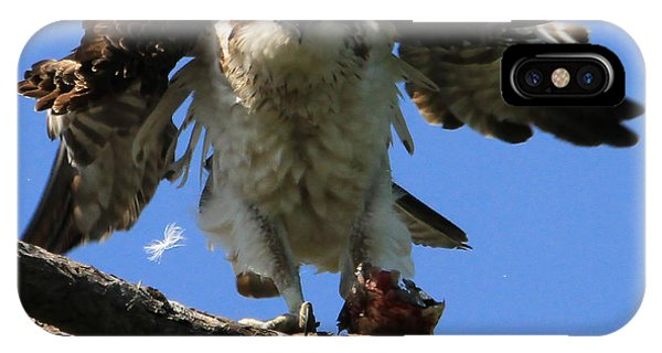 Mad Osprey IPhone Case