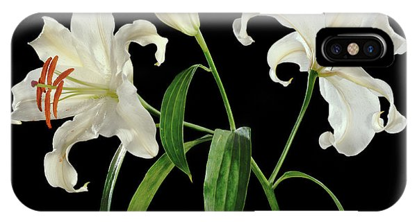 Madonna Lily (lilium Candidum) Phone Case by Gilles Mermet