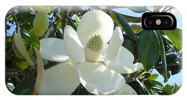 Magnificent Magnolia IPhone Case