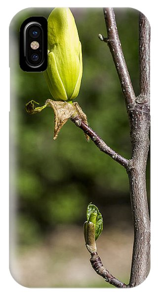 Magnolia Buds IPhone Case