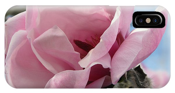 Magnolia In Spring IPhone Case