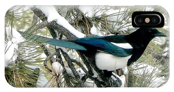 Magpie In The Snow IPhone Case
