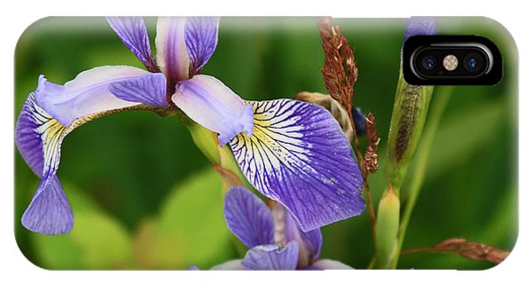 Maine Wild Iris IPhone Case
