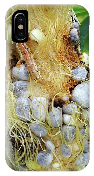 Maize Cob Infected With Corn Smut Phone Case by Eric Schmelz/us Department Of Agriculture