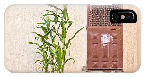 Maize Plant IPhone Case