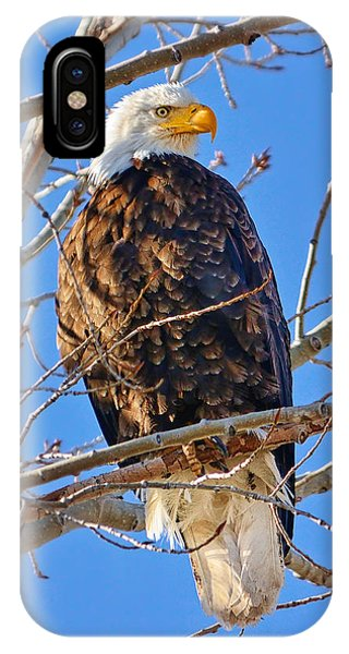 Rights Managed Images iPhone Case - Majestic Bald Eagle by Greg Norrell