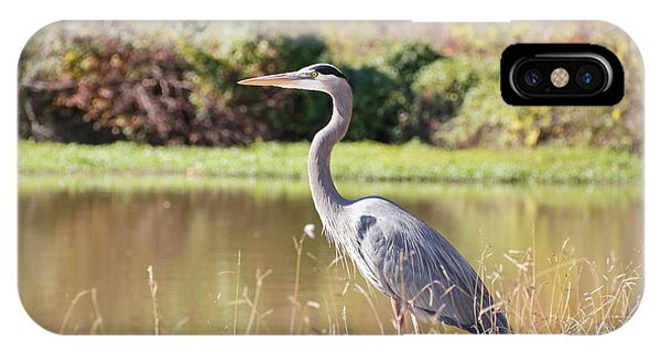 Majestic Great Blue Heron In Autumn IPhone Case