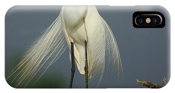 Majestic Great Egret IPhone Case