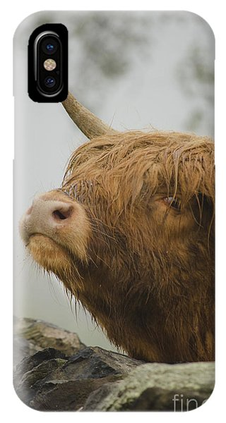 Majestic Highland Cow IPhone Case
