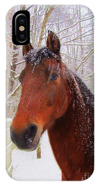 Majestic Morgan Horse IPhone Case