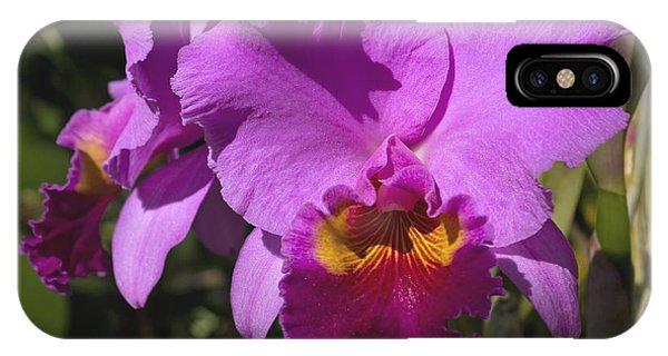 Far North Queensland iPhone Case - Majestic Pink Cattleya Orchid Bloom by Kerryn Madsen-Pietsch