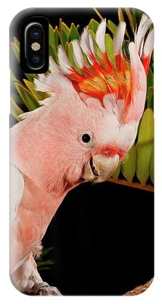 Cockatoo iPhone Case - Major Mitchell's Cockatoo, Lophochroa by David Northcott