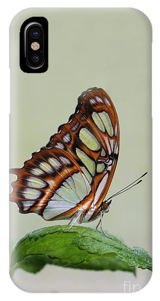 Malachite Butterfly #5 IPhone Case