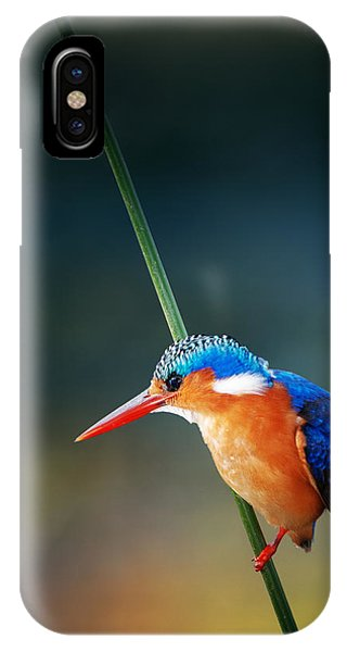 Colourful iPhone Case - Malachite Kingfisher by Johan Swanepoel