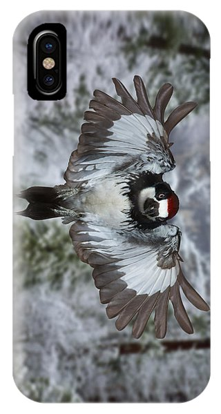 Male Acorn Woodpecker - Phone Case Design IPhone Case