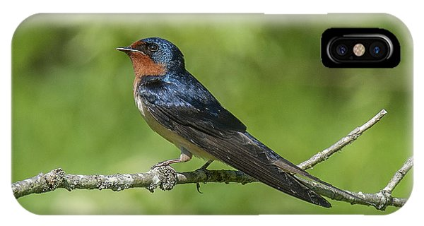 Male Barn Swallow Hirundo Rustica Dsb262 IPhone Case