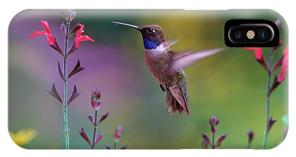 Hummingbird iPhone Case - Male Black-chinned Hummingbird by Tim Fitzharris