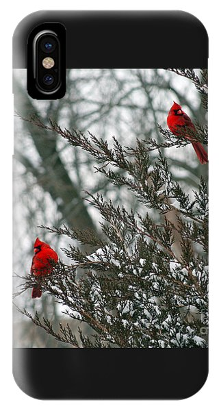 Male Cardinal Pair IPhone Case