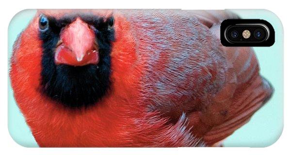 Male Cardinal Portrait IPhone Case