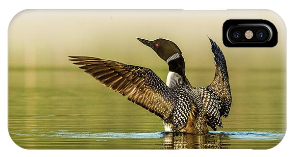 Loon iPhone Case - Male Common Loon Drying His Wings by Chuck Haney