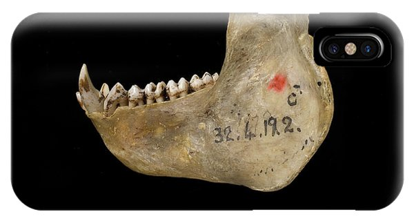 Male Delacour's Langur Jaw Phone Case by Natural History Museum, London/science Photo Library