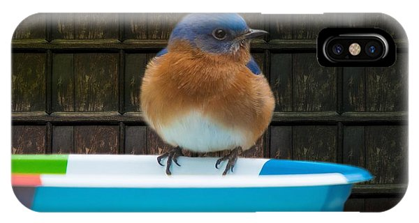 IPhone Case featuring the photograph Male Eastern Bluebird by Robert L Jackson