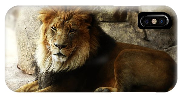 Male Lion At Rest IPhone Case