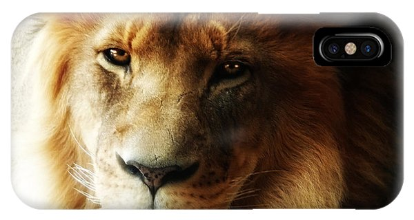 Male Lion Face Close Up IPhone Case