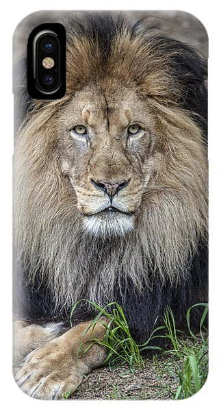 Male Lion Portrait IPhone Case