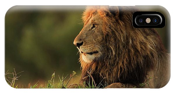 Lions iPhone Case - Male Lion Watching Sunrise In Masai Mara by Massimo Mei