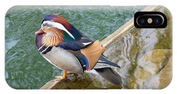 Male Mandarin Duck Sleeping At Pond Edge IPhone Case