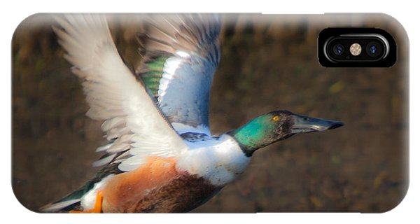 Male Northern Shoveler IPhone Case