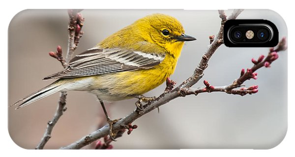 Male Pine Warbler 2 IPhone Case
