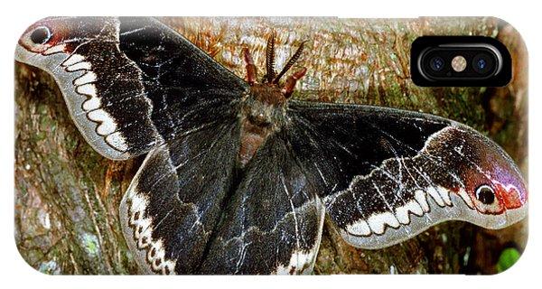 Male Promethea Moth IPhone Case