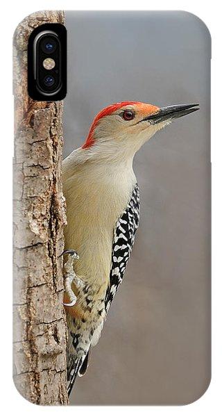 Male Redbellied Woodpecker 1 IPhone Case