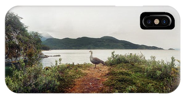 Upland iPhone Case - Male Upland Goose Or Magellan Goose by Panoramic Images