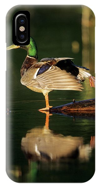 Migratory Birds iPhone Case - Mallard (anas Platyrhynchos by Richard and Susan Day