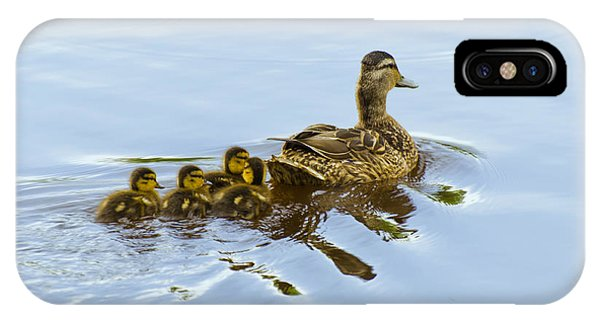 Mallard And Chicks  IPhone Case