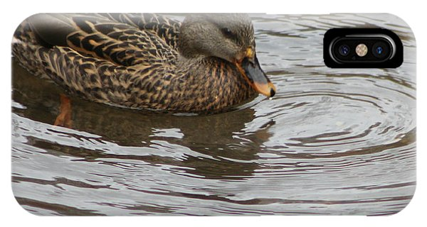 Mallard Duck Female IPhone Case