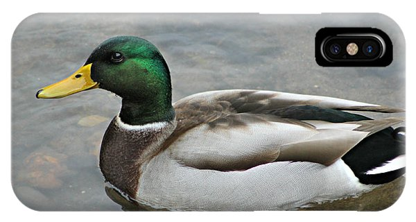 Mallard Duck Male IPhone Case