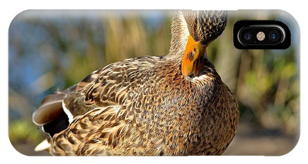 Mallard Duck Preening IPhone Case