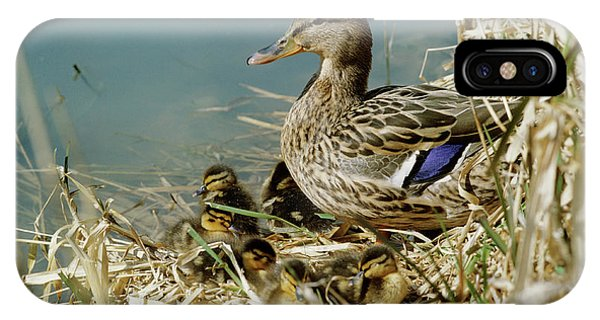 Anas Platyrhynchos iPhone Case - Mallard Duck With Young by Anthony Cooper/science Photo Library